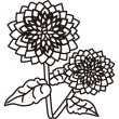 植物 ダリア(モノクロ)