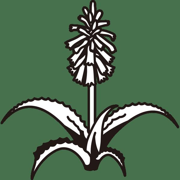 植物 アロエの花(モノクロ)