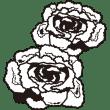 植物 ハボタン(モノクロ)
