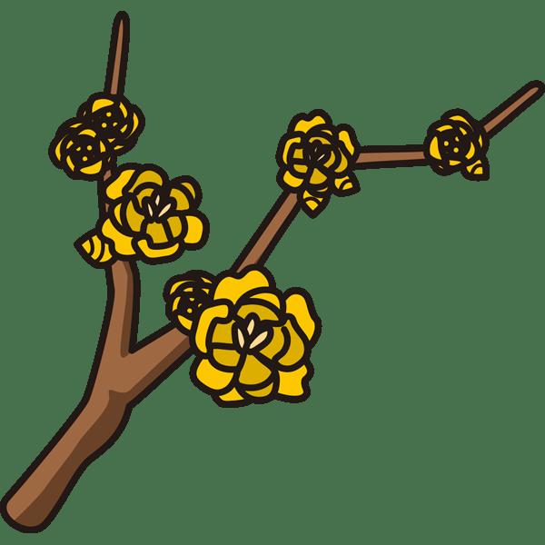 植物 ロウバイ(黄色)(カラー)