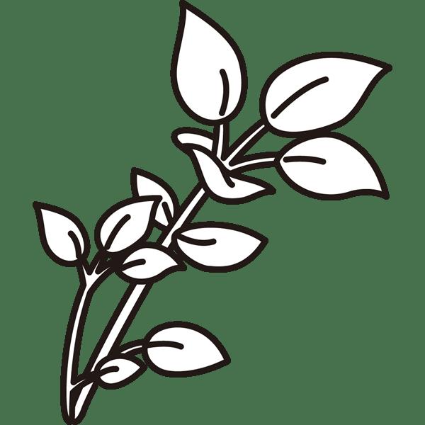 植物 はこべら(モノクロ)