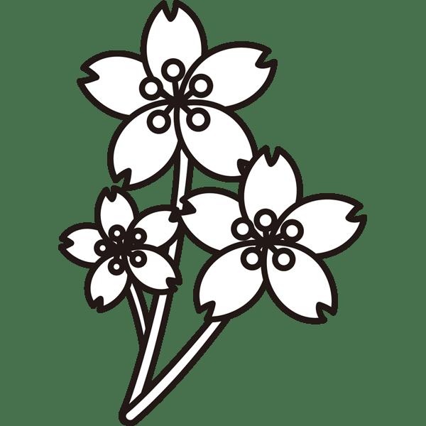 植物 桜(さくら)(モノクロ)