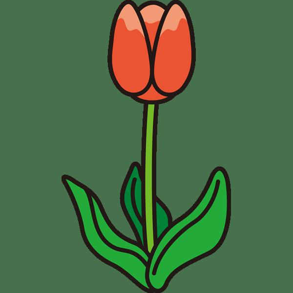 植物 チューリップ(カラー)