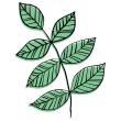 植物 枝葉