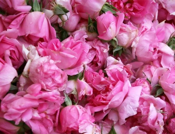 Kdo je SoZoLe Rose