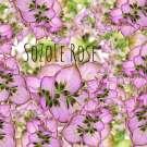 Květová voda Šalvěj muškátová