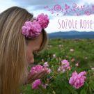 Sběr růží v Růžovém údolí 2021 – část druhá