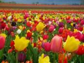 Един от най-хубавите пролетни празници