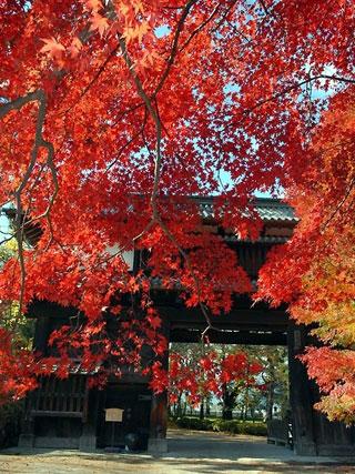 弘前公園の紅葉情報 紅葉情報2016