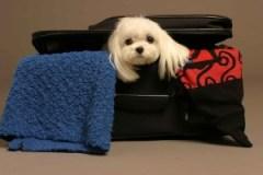 dog-air-travel-pet-care-tips