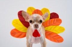 Turkey-Dog