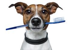 dog-dentist
