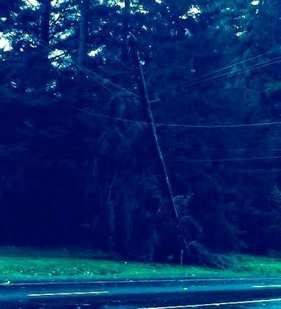 Tree leans on power lines at corner of North Bend Way near Tanner.