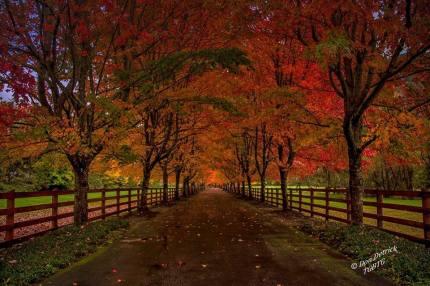 Fall Road Ernies Grove