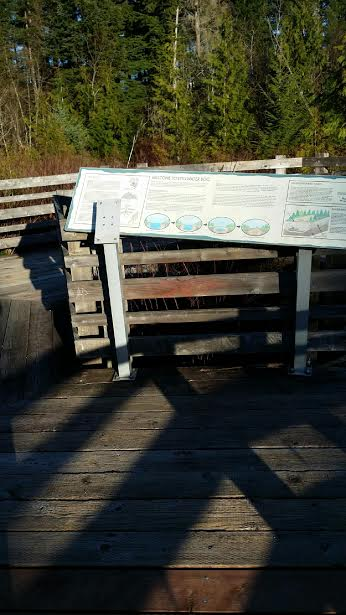 Damaged educational signage at Snoqualmie Community Park bog area