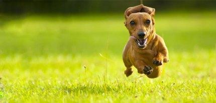 recall dog blog