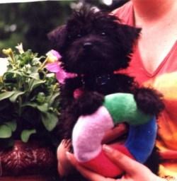 Puppy Lola