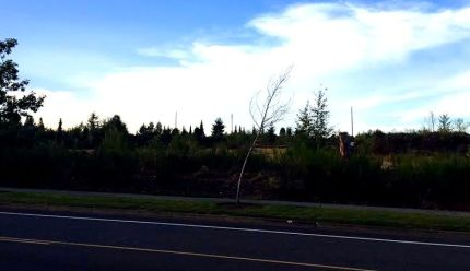 Vacant land at corner of Douglas Street and Snoqualmie Parkway where a potential retail development is proposed.