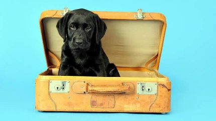 traveler pet