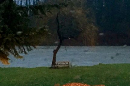 Snoqualmie River rising toward Sandy Cove Park in downtown Snoqualmie, 4:15PM, 12/8/15.