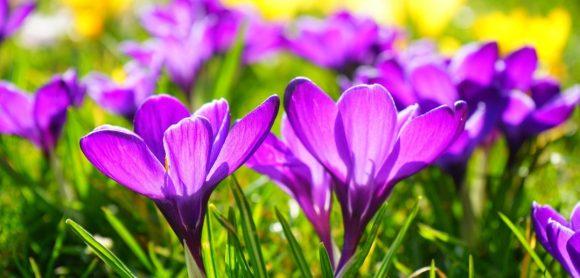 wiosna - kwiatki