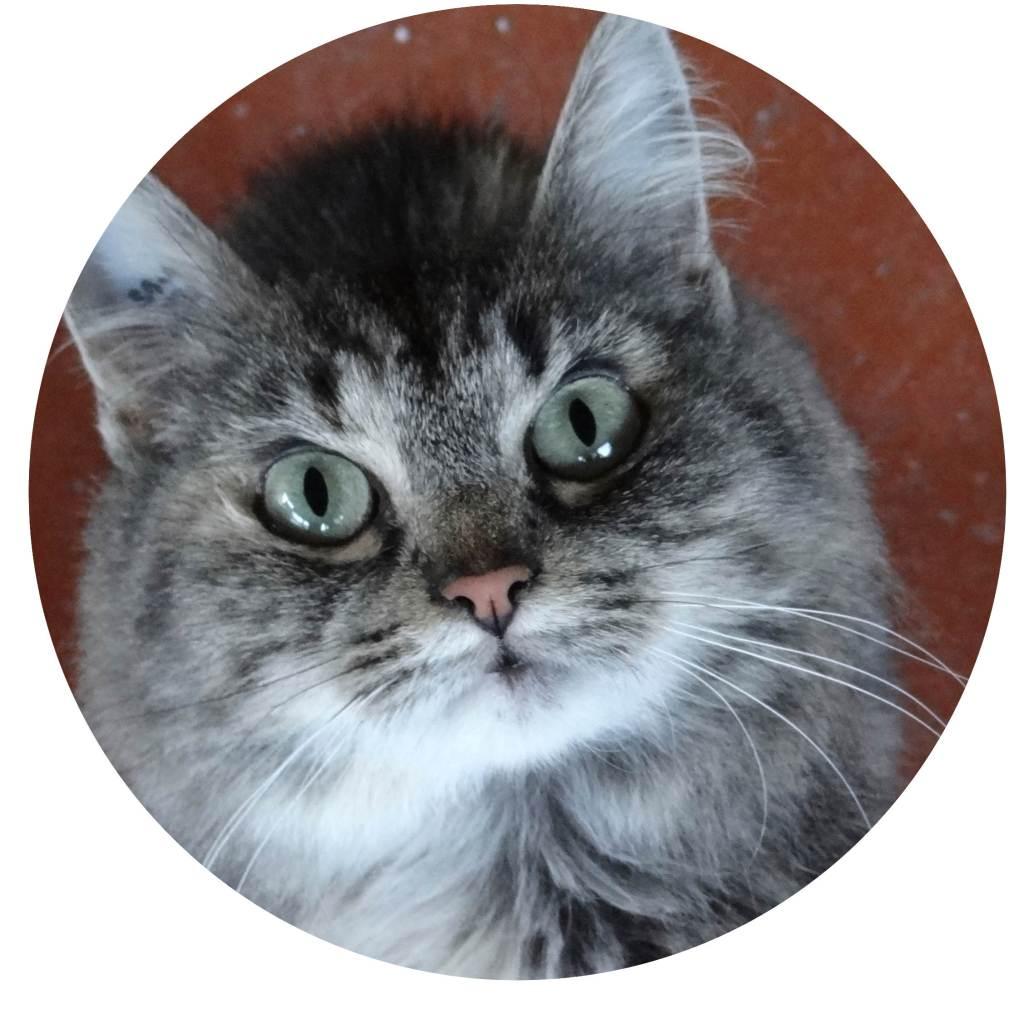 chat à adopter au refuge