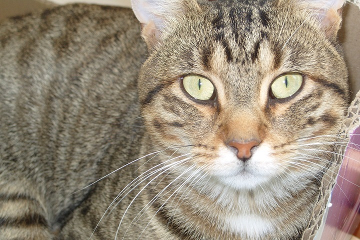 chats a adopter spa de vannes et de la region