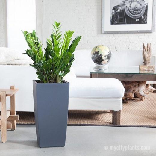 zz-plant-cubico-grey_800x