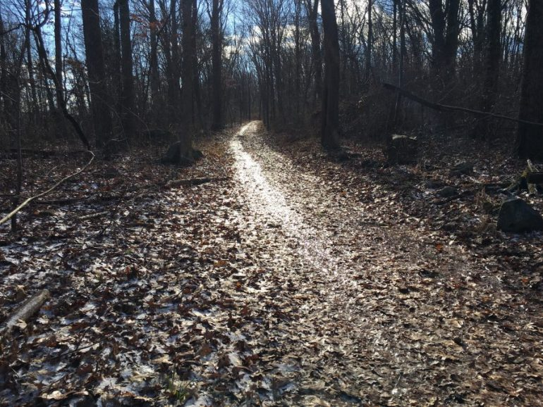 Blue sky shining through the trees and reflecting off the frozen leaves on the trail.