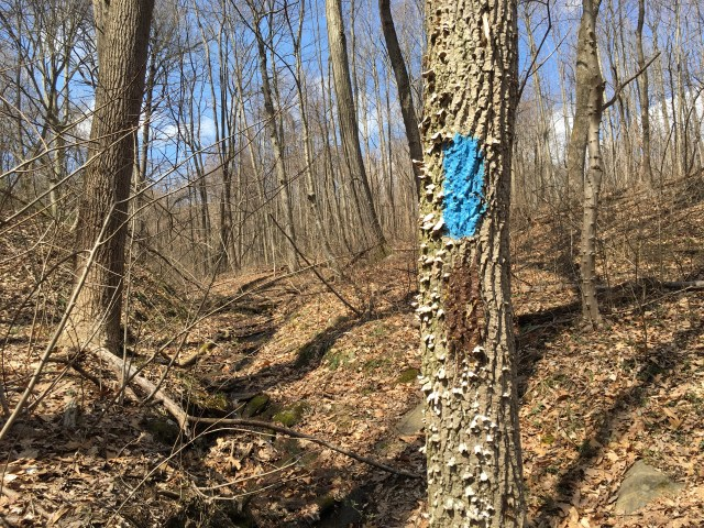 Blue paint on a leafless tree