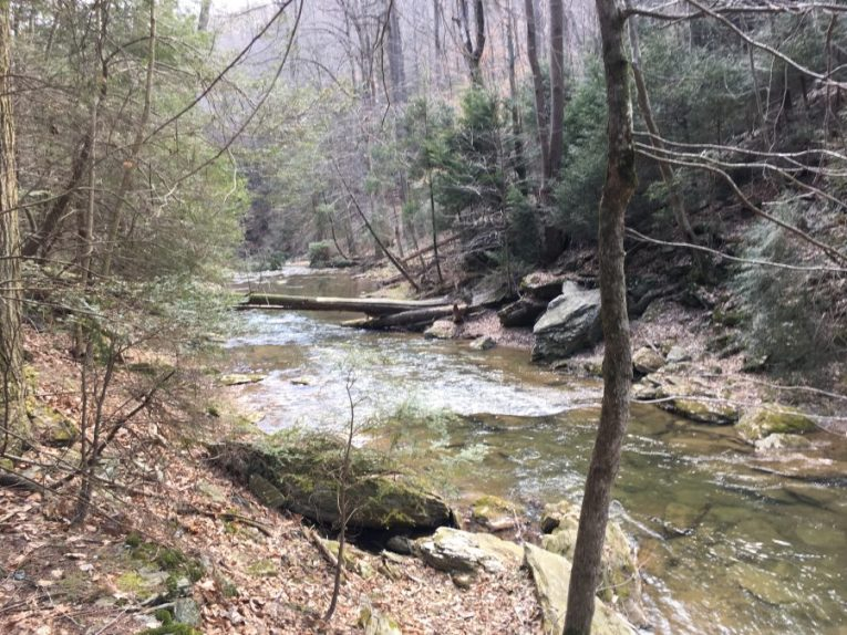 A fast running creek with a tall tree log spanning the water width.