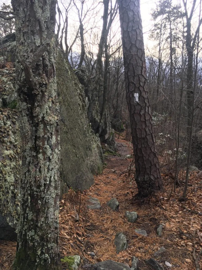Large boulders line the left side of a rock strewn trail in a leafless forest of trees.