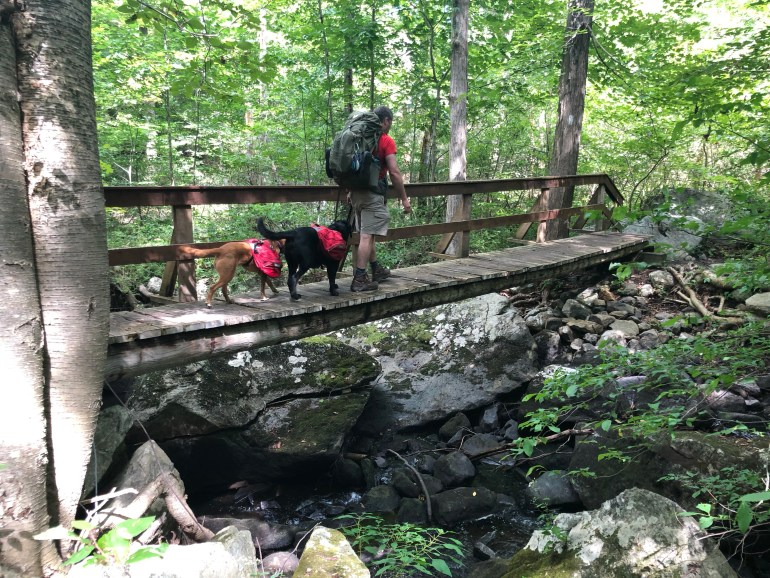 Backpacking man walking across a bridge with 2 backpacking dogs