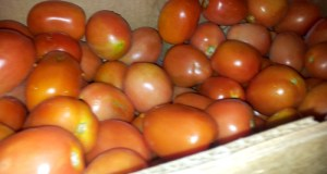Canned Roma Tomatoes - Space Coast Preppers.com