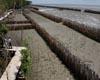 bamboo-wall-protect-land-thailand-afp-sm.jpg
