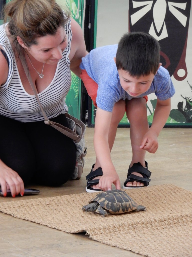 Boy touching a tortoise at SPACE's Ranger Stu event