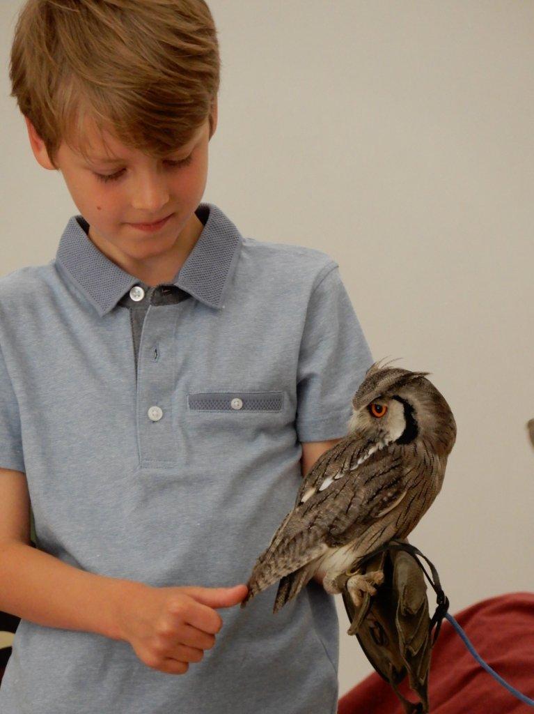 Boy holding an owl at SPACE's Ranger Stu event