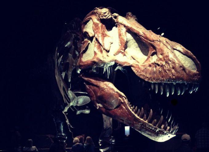 Alberta is a hotbed of dinosaur fossils #AlbertaDinosaurs