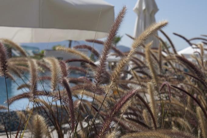 Plants at Sensatori Fethiye