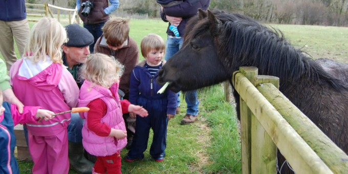 Feeding-Briggs-and-Stratton-Ponies