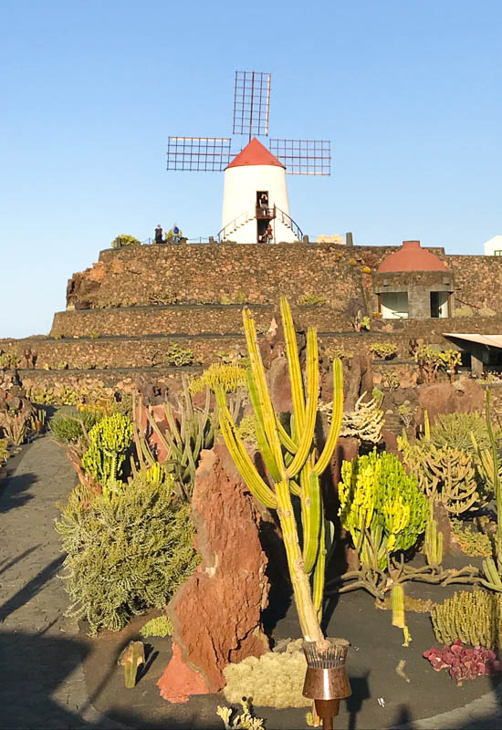 This charming windmill looks over Manrique's cactus gardens in Lanzarote
