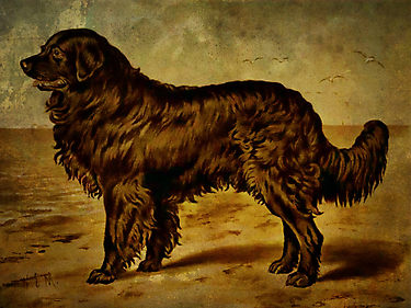 This fuzzy guy didn't make the wall, but we wanted to share him with you anyway. This is Seaman, Meriwether Lewis' dog. Lewis bought the Newfoundland in Pittsburgh for $20, and Seaman made it to the Pacific and back.