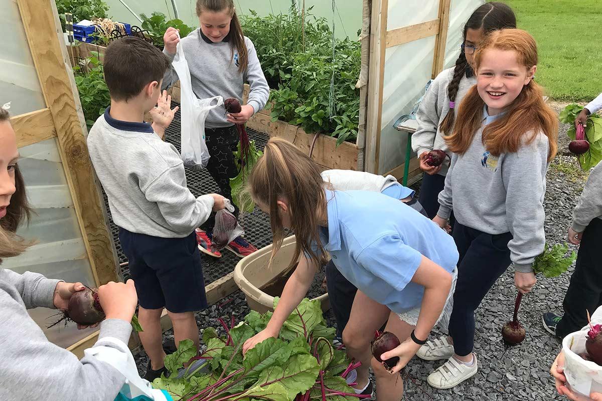 Primary School Garden Group