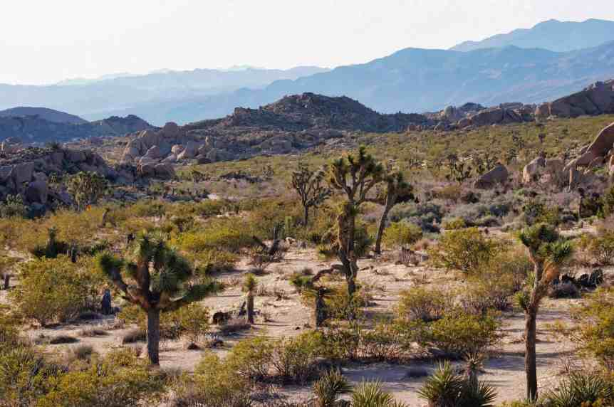 Visiting Joshua Tree National Park in the Day 1