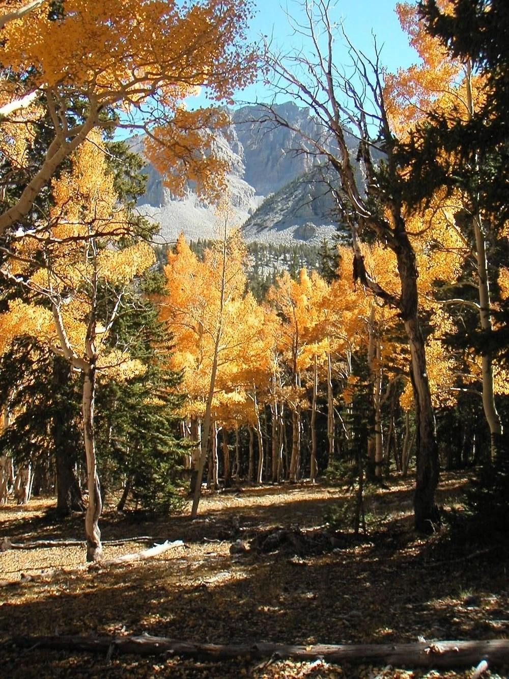 Stargazing in Great Basin - Autumn Colors