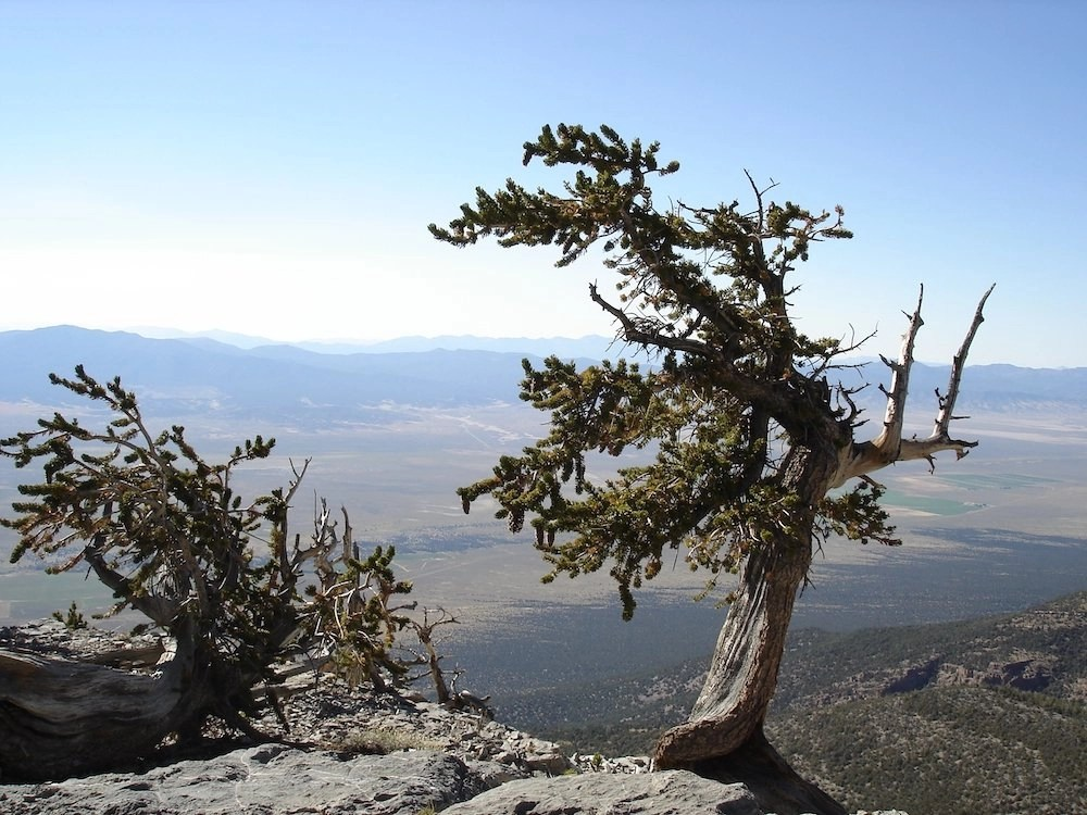 Stargazing in Great Basin - Bristlecone Pine
