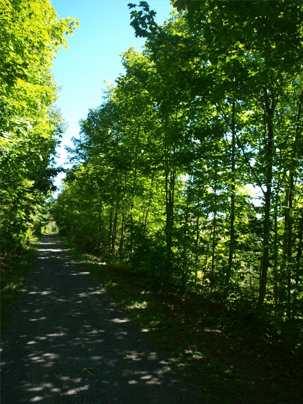 Trees, along the northside trail