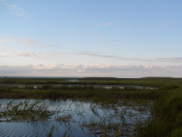 Long Point marshes. Image courtesy of Wikimedia Commons.