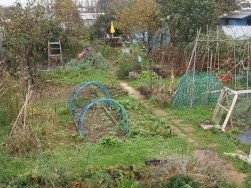 allotment december