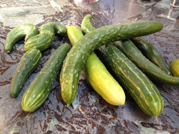 When life gives you cucumbers…
